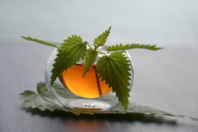 Ein Tee aus Brennnessel eignet sich zum Entschlacken und Entgiften.