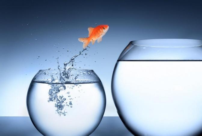 Ein kleiner Goldfisch springt aus einem kleinen Aquarium in ein größeres.