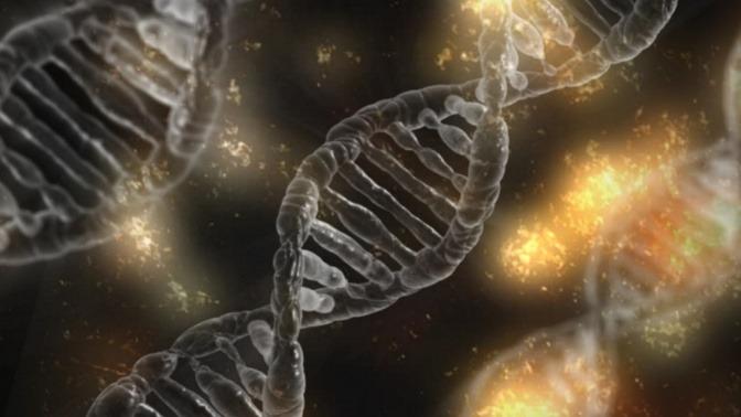 Die DNA ist die Erbinformation einer jeden Zelle