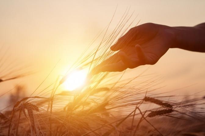 Eine Hand auf einem Feld tankt Energie in der Sonne