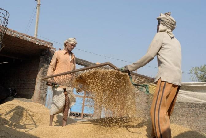 Reisbauern beim Sieben