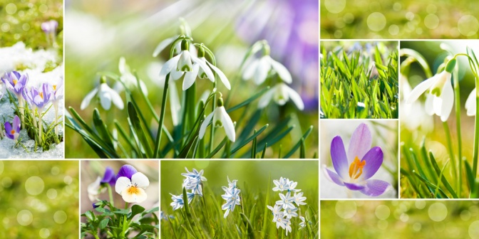 Holz Element: TCM im Frühling