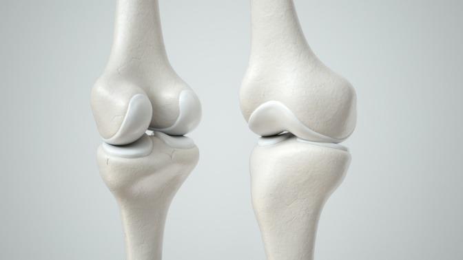 Knochen mit Knorpel
