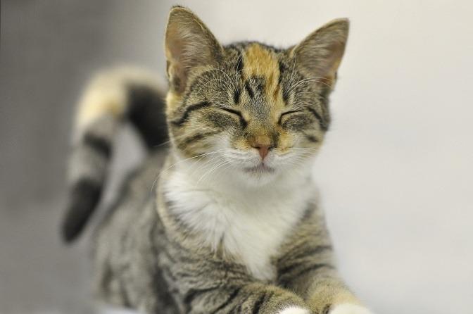 Eine Katze schaut zufrieden aus