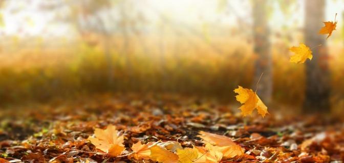 Im Wald ist Herbst