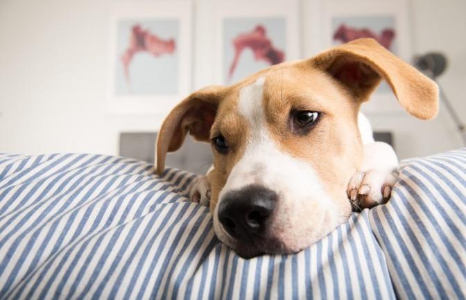 Gesunder Hund Ohren Reinigen Und Richtig Pflegen