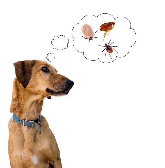 Mittel Gegen Milben Hund Vor Ungeziefer Befreien