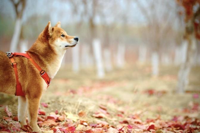 Ein Hund mit guten Immunsystem ist im Herbst im Freien