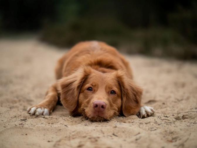 Ein Hund liegt im Sand