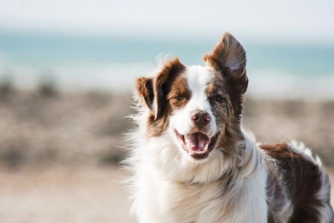 Ein zufriedener Hund ohne sichtbaren Milbenbefall