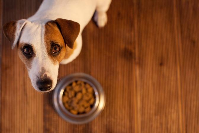 Hund vor Futterschüssel.