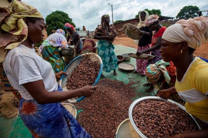Frauen sind bei der Kakaoernte in Cote d'Ivoire