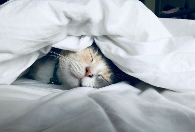 Eine Katze liegt eingekuschelt in einer Bettdecke