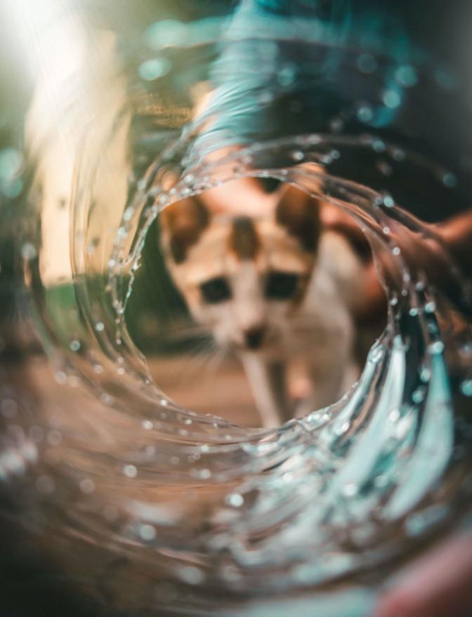 Eine Katze schaut durch einen Wassertunnel