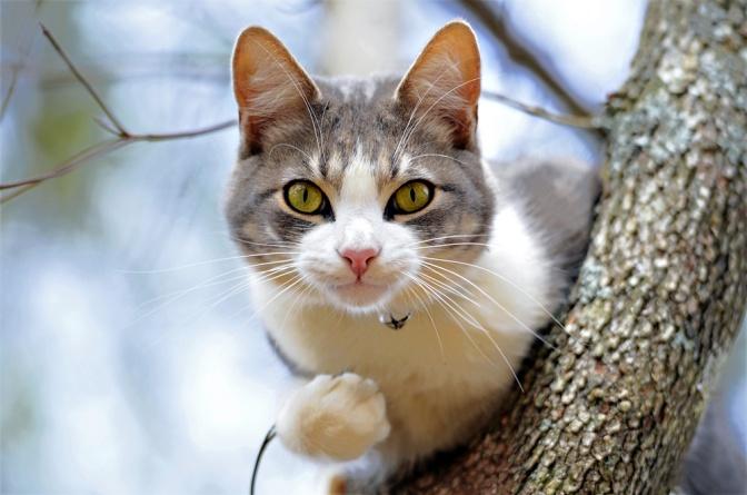 Eine Katze liegt auf der Lauer