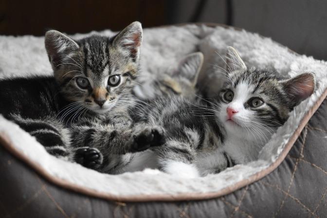 Zwei Katzenbabies