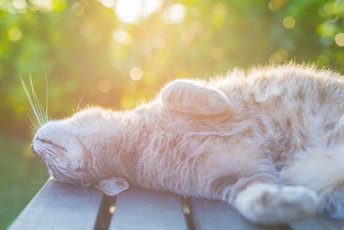 Eine zufriedene und glückliche Katze reckt sich bei Sonnenaufgang in einem Garten.