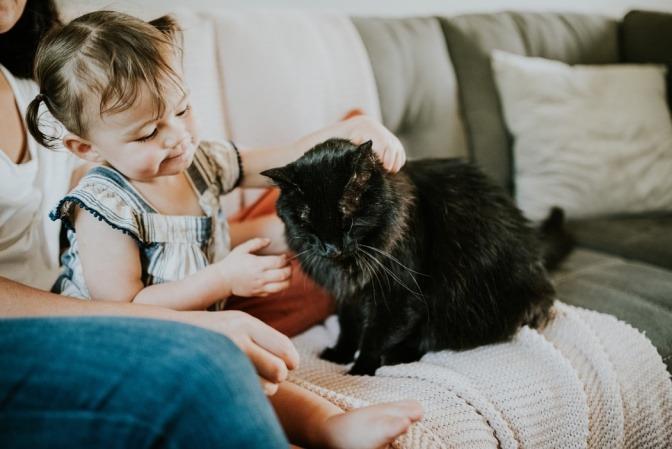 Ein junges Mädchen streichelt eine schwarze Katze mit langem Fell