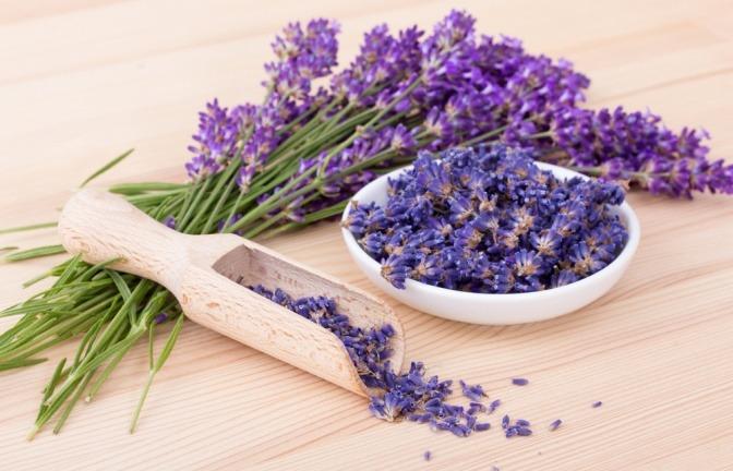 Lavendel Blüten Wirkung