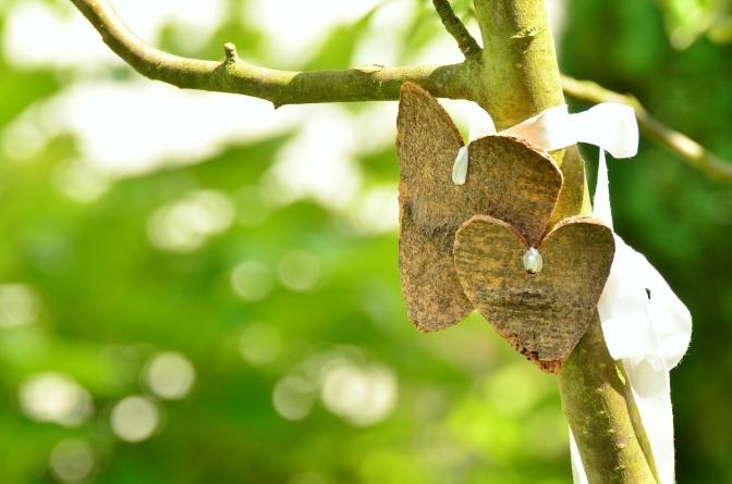 Auf einen Baum sind zwei Herzen aus Holz gebunden