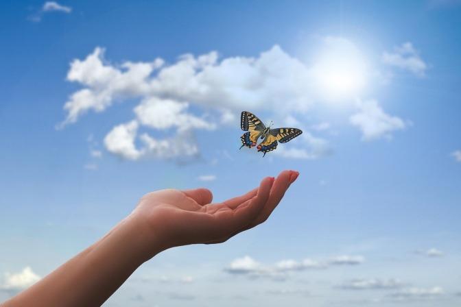 Eine Hand lässt einen Schmetterling los