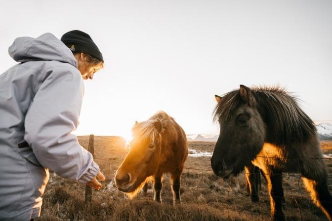 Ein Mensch streckt seine Hand zwei Pferden entgegen