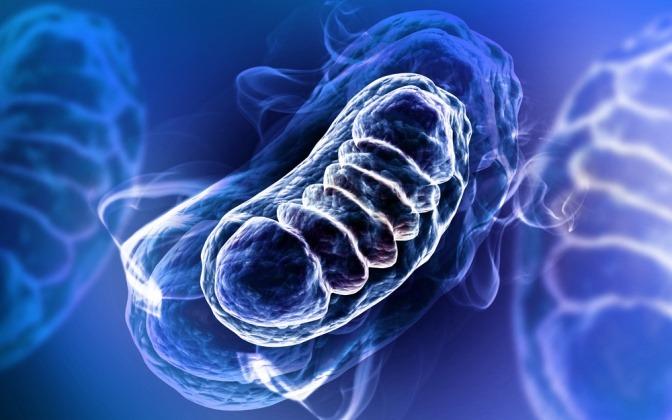 Mitochondrien in einer Grafik