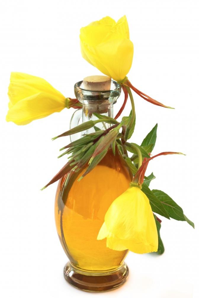 Blüten und Öl der Nachtkerze