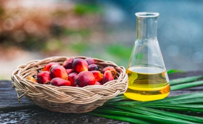 Palmöl in der Kosmetik