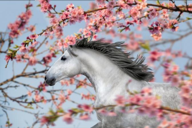 Pferd unter blühendem Baum