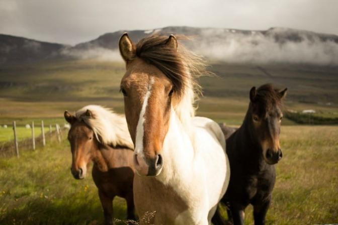 Drei Pferde stehen auf einer grünen Wiese
