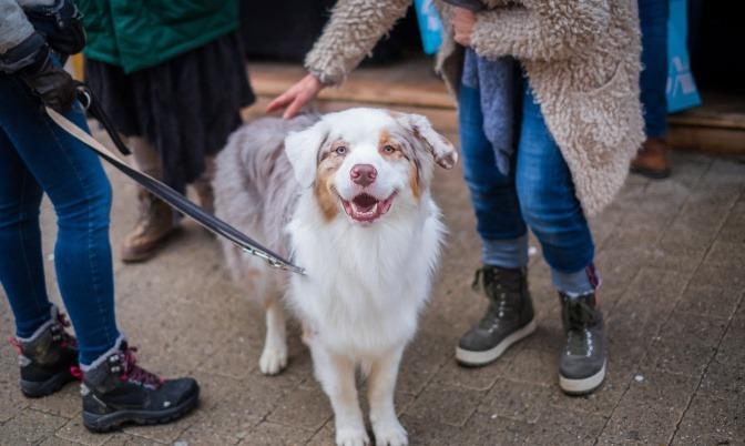 Ein Hund steht im Winter inmitten einer kleinen Gruppe von Menschen und wird gestreichelt.