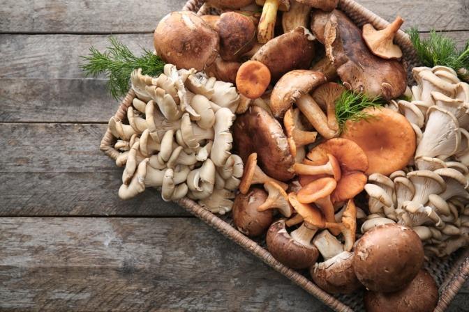 Korb mit verschiedenen Pilzen