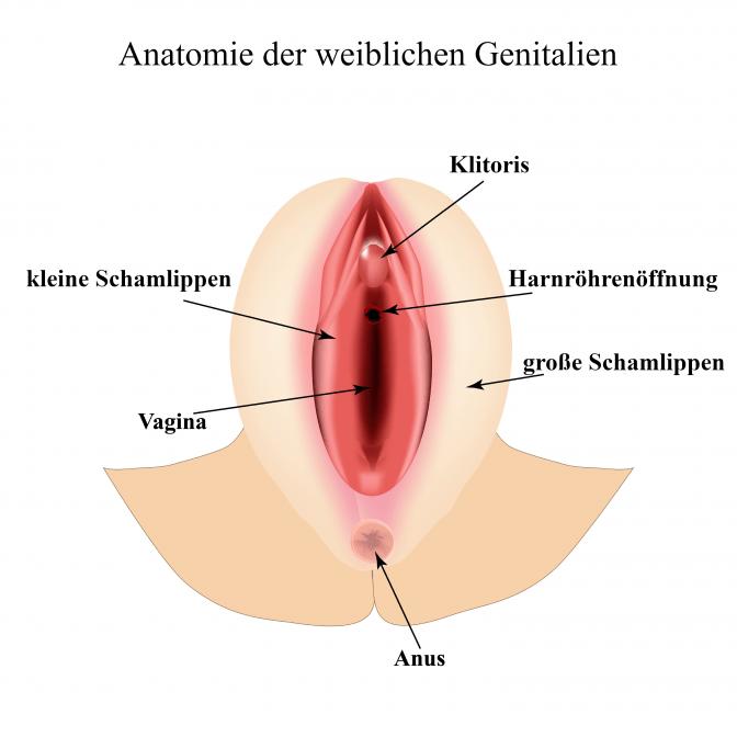 Eine Grafik zeigt die weiblichen Genitalien mit Schamlippen