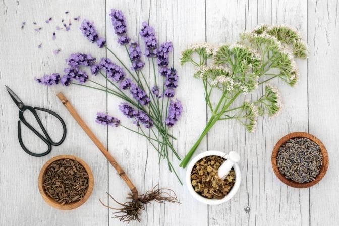 Schlaffördernde Pflanzen Lavendel, Kamille und Baldrian