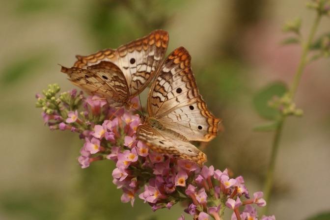 Ein Schmetterling sitzt auf einer Blüte