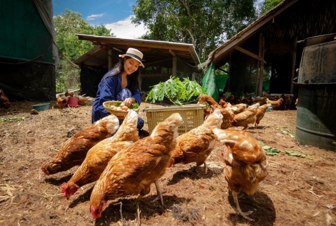 Eine junge Bäuerin sammelt Eier ihrer freilaufenden Hühner ein.