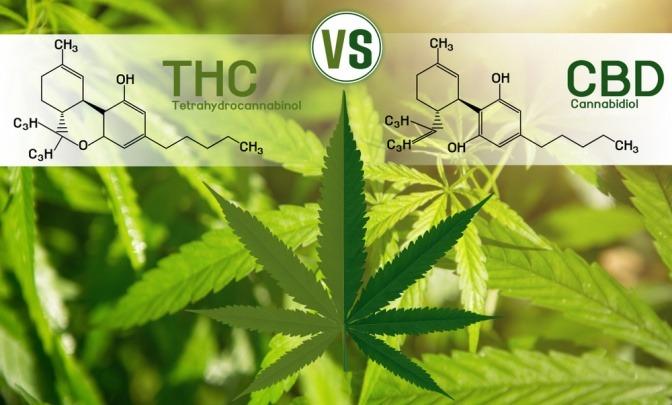Eine Gegenüberstellung der chemischen Zusammensetzung der beiden Cannabinoide THC und CBD.