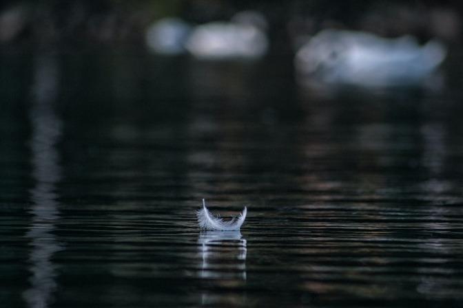 Eine weiße Feder schwimmt auf einem Teich im Wald.