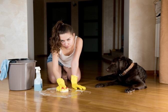 Eine Frau putzt den Boden ihrer Wohnung, nachdem ihr Hund ein kleines Malheur verursacht hat.