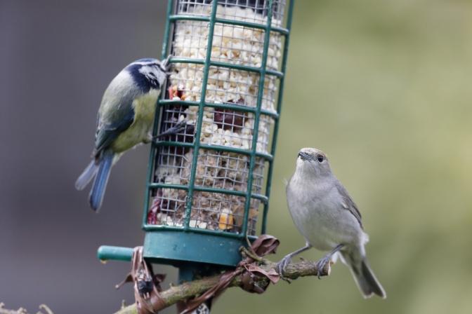 Vögel werden gefüttert