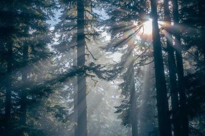 In einen Wald scheint die Sonne rein