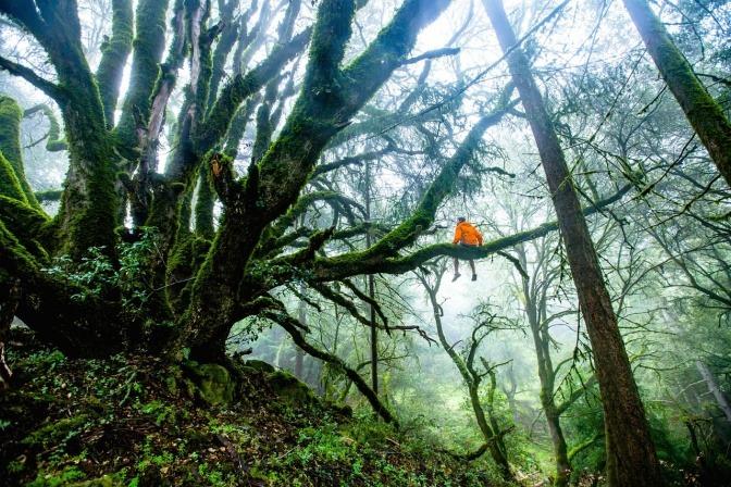 Ein Mann mit starkem Immunsystem sitzt auf einem Baum in einem Wald