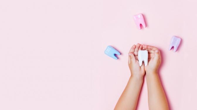 Kind hält Zahnmodell in der Hand