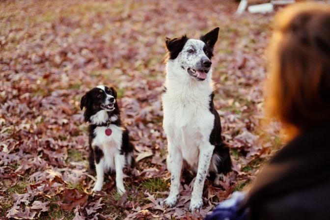 Zwei Hunde sitzen im Laub