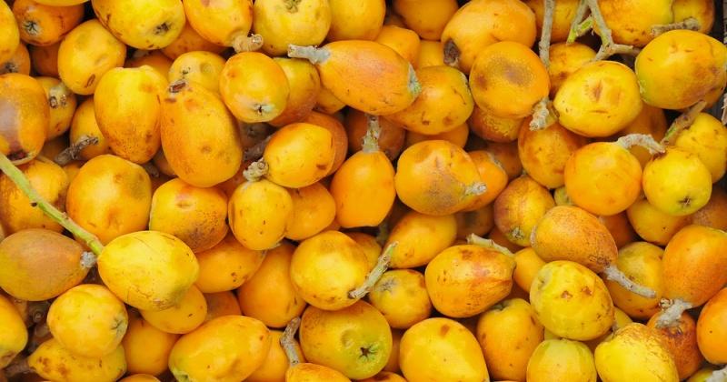 Viele Marulafrüchte