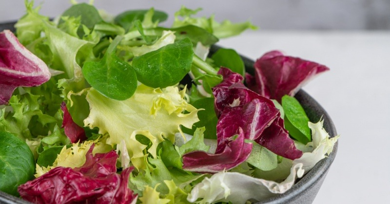 Verschiedene Salate mit Bitterstoffen sind in einer Schüssel
