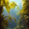 Algen sind im Meer