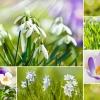 Collage mit Blumen im Frühling, dem TCM Element Holz