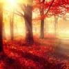 Die Sonne strahlt in einen herbstlichen Wald